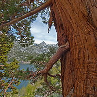 Incense Cedar trees <br /> (Calocedrus decurrens) frame Lake Sabrina in the Eastern Sierra Nevada near Bishop, California.