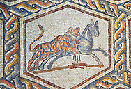 A tiger hunting from the 3rd century Roman mosaic villa floor from Lod, near Tel Aviv, Israel. The Roman floor mosaic of Lod is the largest and best preserved mosaic floor from the levant region along the eastern Mediterranean coast. It is unclear whether the owners were Jewish, Christian or pagan but either way they would have been wealthy to own such a magnificent floor. The Shelby White and Leon Levy Lod Mosaic Centre, Lod, Israel. .<br /> <br /> If you prefer to buy from our ALAMY STOCK LIBRARY page at https://www.alamy.com/portfolio/paul-williams-funkystock/greco-roman-sculptures.html . Type -    lod  - into LOWER SEARCH WITHIN GALLERY box - Refine search by adding a subject, place, background colour, museum etc.<br /> <br /> Visit our ROMAN WORLD PHOTO COLLECTIONS for more photos to download or buy as wall art prints https://funkystock.photoshelter.com/gallery-collection/The-Romans-Art-Artefacts-Antiquities-Historic-Sites-Pictures-Images/C0000r2uLJJo9_s0