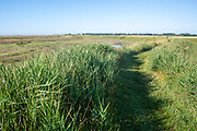 Coast path on flood defence sea wall with lagoon and vegetated shingle, Alderton, Suffolk, England, UK
