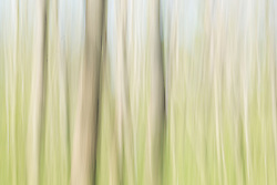 Abstract of trees and grasses, Texas Buckeye Trail, Great Trinity Forest, Dallas, Texas, USA.