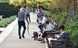 © Licensed to London News Pictures. 12/04/2020 London, UK. Dog walkers and members of the public in Holland Park make the most of fine weather on Easter Sunday interpreting observing social distancing on a subjective basis. Easter Day saw the death rate   from COVID-19 in the UK pass 10,000 with some projections expected to exceed Italy and Spain, so far the worse hit countries in Europe. Photo credit: Guilhem Baker/LNP