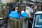 storage of animal ornament Yokosuka Japan