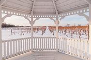 Pellegrini Vineyard, Cutchogue, New York, USA
