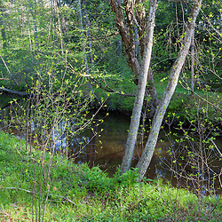 The Oyster River as it flows through a forest in Durham, New Hampshire.