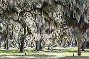 An couple walk their dog along the ancient Live Oak trees covered in Spanish moss at the Fort Frederica National Monument, the original colonial settlement in St. Simons Island, Georgia. Fort Frederica was established by Georgia founder James Oglethorpe in 1736 to serve as a bulwark against the Spanish settlements in Florida,