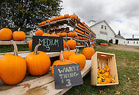 Pumpkins for sale on display at Joe and Cindy Rolfe's in Belmont.  (Karen Bobotas/for the Laconia Daily Sun)