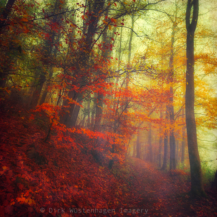 Dreamy forest scene with colourful leaves - texturized photograph