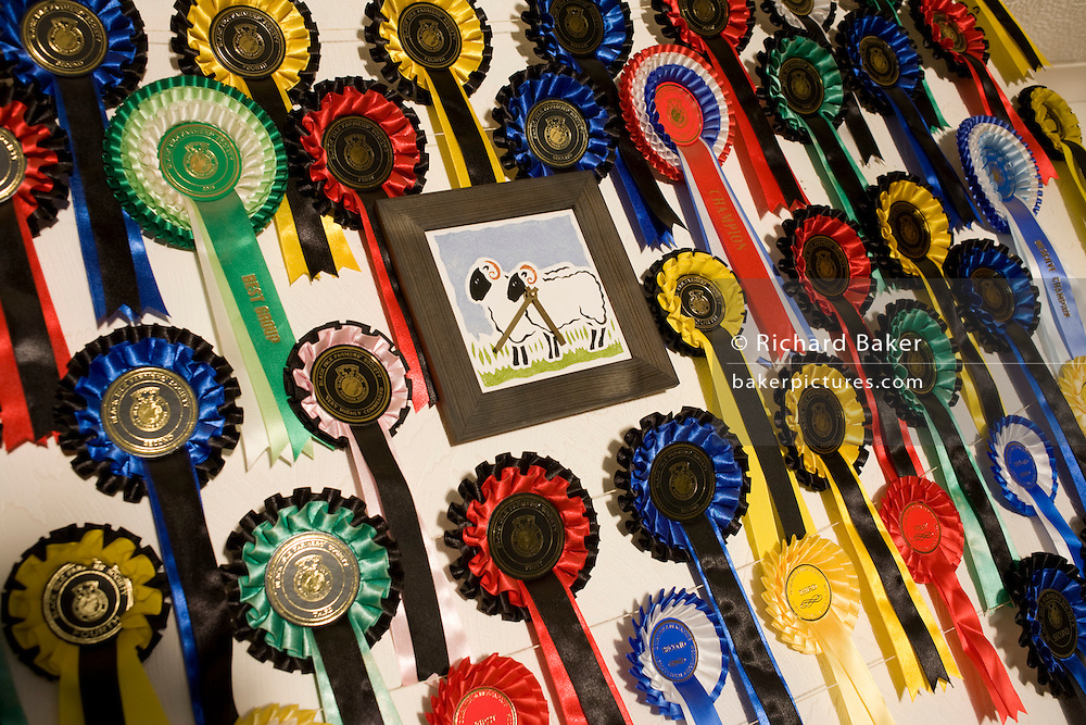 Rosettes and successes from Blackface sheep competitions on mantlepiece and wall of breeder and crofter Vic Bull Isle of Skye
