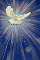 """I saw the Spirit descend like a Dove - Painting by Dino Carbetta""…<br />