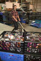North America, United States, Washington, Kirkland, teenager working in food bank warehouse.  MR