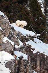 The precipice where mountain goats live. The Snake River Range near Alpine Wyoming