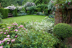 The lawn with wooden bench and lion statue acting as focal points. Rosa 'Pual's Himalayan Musk' on far boundary hedge