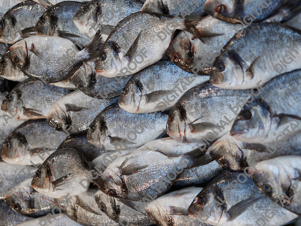 Napoli, April 26, 2018.  Detail of a pile of fishes being sold at the fish market with in an orderly fashion