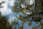 This image reflects the multi level connections of nature.  Within one image you can see the stream, rocks, Water Strider, concentric rings of movement, with the reflection of the trees, sunlight and blue sky.