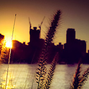 Sunset reeds, Brisbane, Australia (June 2003)