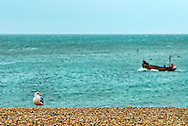 Seagul and Fishing Boat, The Stade, Hastings Old Town, East Sussex, Britain.