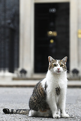 Larry the cat outside 10 Downing Street, London.