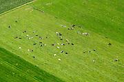 Nederland, Noord-Brabant, Gemeente Someren, 26-06-2014; koeien liggen in het weiland en herkauwen. Ontgonnen hoogveengebied, ten Westen van de Groote Peel., <br /> luchtfoto (toeslag op standaard tarieven);<br /> aerial photo (additional fee required);<br /> copyright foto/photo Siebe Swart.