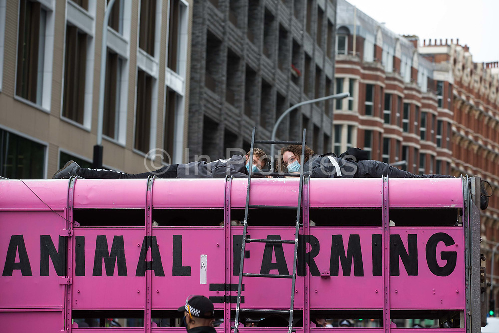 Animal rights activists from Animal Rebellion are pictured glued to the top of and inside a truck in order to blockade the Department of Health and Social Care on 3 September 2020 in London, United Kingdom. Animal Rebellion activists are protesting in solidarity with victims of the global food system and to demand that the UK transitions to a sustainable plant-based food system.