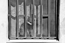 Lecce - Salento - Un gatto al sole guarda all'esterno di una finestra chiusa.