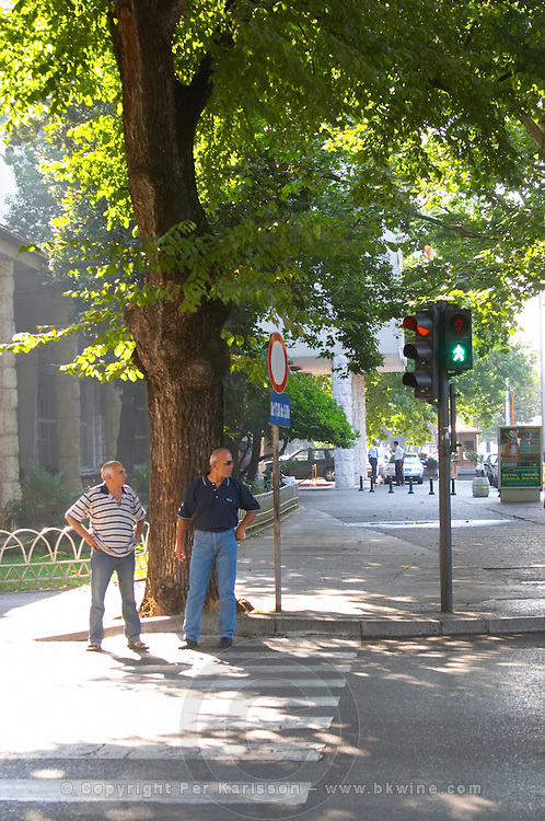 Two men standing waiting at a pedestrian crossing on a street corner under a big tree giving shade. Podgorica capital. Montenegro, Balkan, Europe.