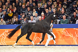 578 - Gaudi<br /> KWPN Stallion Selection - 's Hertogenbosch 2014<br /> © Dirk Caremans