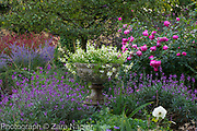 Stone urn with Scaevola 'White Wonder' -Fairy Fanflower, Rosa 'Royal Jubilee' - Pink English Rose by David Austin, Erysimum 'Bowles Mauve'  - September