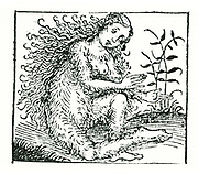Hairy woman, a member of a tribe believed by the ancients to inhabit certain regions of the earth. From Hartmann Schedel 'Liber chronicarum mundi' (Nuremberg Chronicle) Nuremberg, 1493.