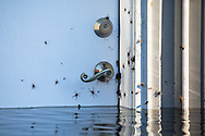 Spiders on a flooded home in Socastee, South Carolina following Hurricane Florence.