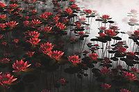 On its own, or even when it is combined with the other waterlilies piece in this collection, this example of waterlilies is certain to impress. At the same time, this is a scene that can bring to mind for us thoughts of great peace. There is a quality to pieces such as these in which we are seamlessly and quite suddenly brought back to another time or place. We can't live in the past forever, but this charming, evocative piece allows us to drift back every once in a while. These pieces are available as wall art, as t-shirts, or across several interior products. .<br />