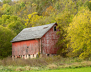Wisconsin Backroads, weathered red barn, in a yellow wood. Photo taken October 20, 2019.