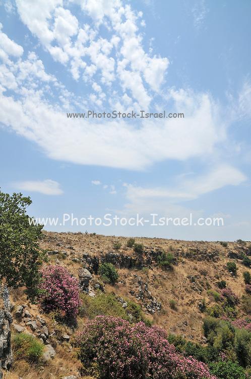 Ayit waterfall, Yehudiya Nature reserve Golan Heights, Israel