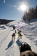 NEWS&GUIDE PHOTO / PRICE CHAMBERS.Photgrapher Price Chambers defies common sense as he makes this image while driving a dog sled for the first time. The thrill of speeding across the snow-covered landscape is amplified by a lack of noisy engines and exhaust fumes.