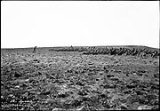 "9707-K204. written on original negative: ""The bachelor seals, Gorbatch Rookery"" St. Pauls Island. Pribilof Group. July 11, 1919"