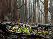 Forest scenes