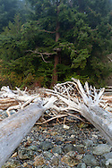 Tree stumps and driftwood on the rocks at Whytecliff Park beach in West Vancouver, British Columbia, Canada