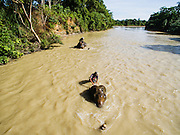 At a forest station in Leuser National Park, Forest rangers  who use elephants to patrol the national park, give their elephants a bath in the river, Sumatra, Indonesia