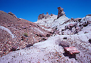 Petrified Forest National Park in Arizona was once home to some of the earliest dinosaurs known from the Triassic some 220 million years ago.