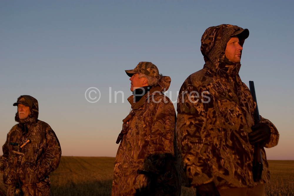 Duck hunting at dawn on a hilltop south-east of Minot. The duck hunters travel in the dark to the place they suspect will be the morning feeding roost for ducks. As the sun comes up they have prepared decoys in the field and hide behind some undergrowth in their camouflage clothing. As the sun rises soem ducks take to the air for their morning feed. As they draw near the hunters make female and feeding duck calls to attract the flying birds towards the decoys and to within shooting range. The moment they are close enough the hunters quickly take aim anf fire their shotguns; some of the ducks fall to the ground. A great deal of work and effort goes into this type of shooting, with the result being a few fine Mallards for the pot.