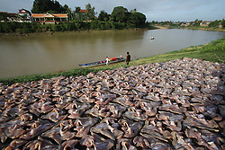 Fish drying in the open air beside the river in Kampong Thom, Cambodia.