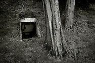 Two trees beside a bunker entrance in the Marin Headlands near San Francisco, California.