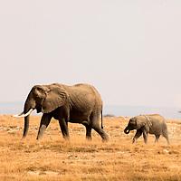 Africa, Kenya, Amboseli. Mother and baby elephant in Amboseli.