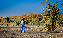 A herdsman with a flock of goats in the Moroccan Sahara Desert near Chegagga<br /> <br /> (c) Andrew Wilson | Edinburgh Elite media