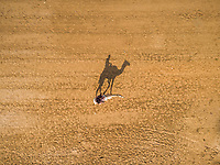 Aerial view of a person on a camel in the desert of Ras Al Khaimah, U.A.E.