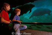 children observe Florida manatee, Trichechus <br /> manatus latirostris, at Homosassa Springs State <br /> Wildlife Park, Florida MR 259-260