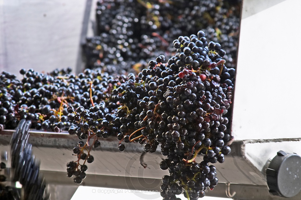 Grape reception at the winery. Merlot. Chateau Kirwan, Margaux, Medoc, Bordeaux, France