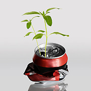 Seedlings,Stem, Leaves, Red and black can, No people