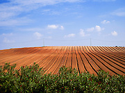 Ploughed farmland ready for sowing Photographed in Israel