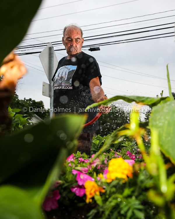 (8/3/14, HOLLISTON, MA) RAINMAKER. Bobby Blair, of Holliston, picks up where the rain left off, watering the petunias  along Central Street in Holliston on Sunday. Daily News and Wicked Local Photo/Dan Holmes