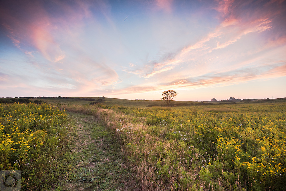 Here on the Dickens Preserve, 120 acres of preserved meadow and historic farmland, the golden rod bloom changes the entire landscape to one of beautiful golden wonder. Hopefully you're not allergic to this late summer bloomer, but it's well worth the trip to see the rolling hills covered in a brilliant yellow. Walk to the bluff for a panoramic view of the ocean and crashing waves, or wander through the meadow fields for a breathtaking view of meadow grasses and the occasional deer.